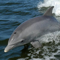 Save marine wildlife from harmful new drilling