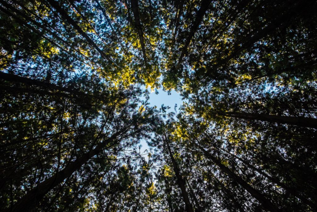 Environmental Action Shares: forest Photo by Jay Wennington on Unsplash