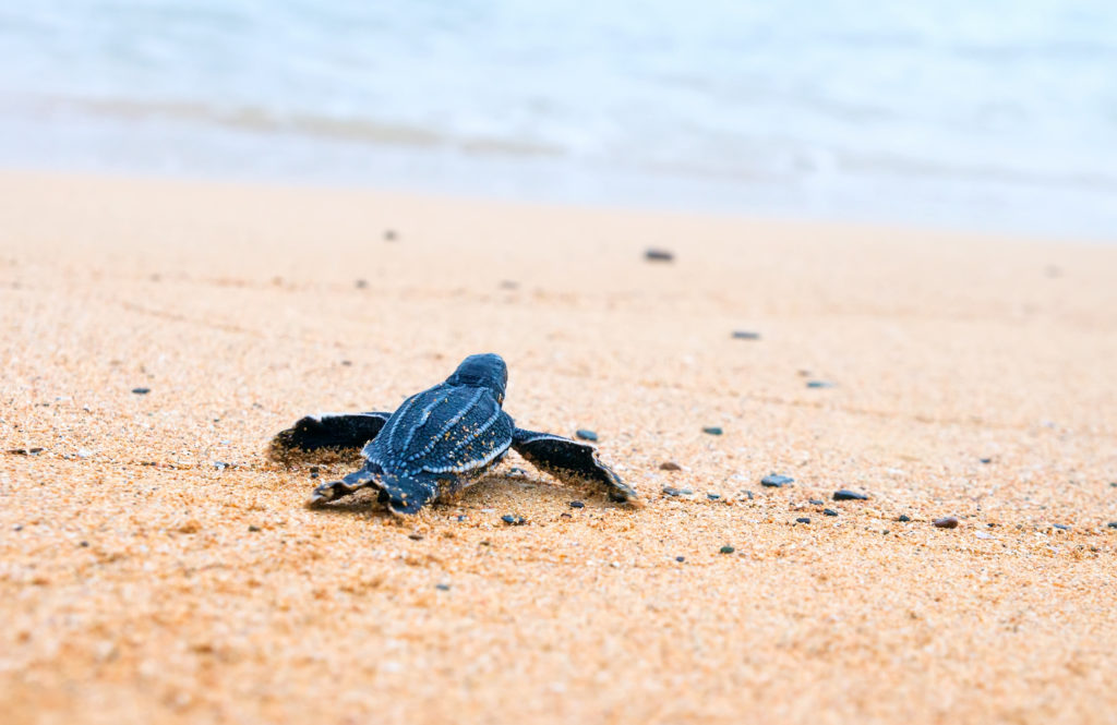 Environmental Action at Work: Protecting our coasts. Photo: IrinaK/Shutterstock