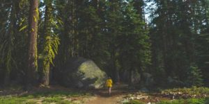 Environmental Action Shares: a walk in the woods (Photo: Jake Hinds, Unsplash)