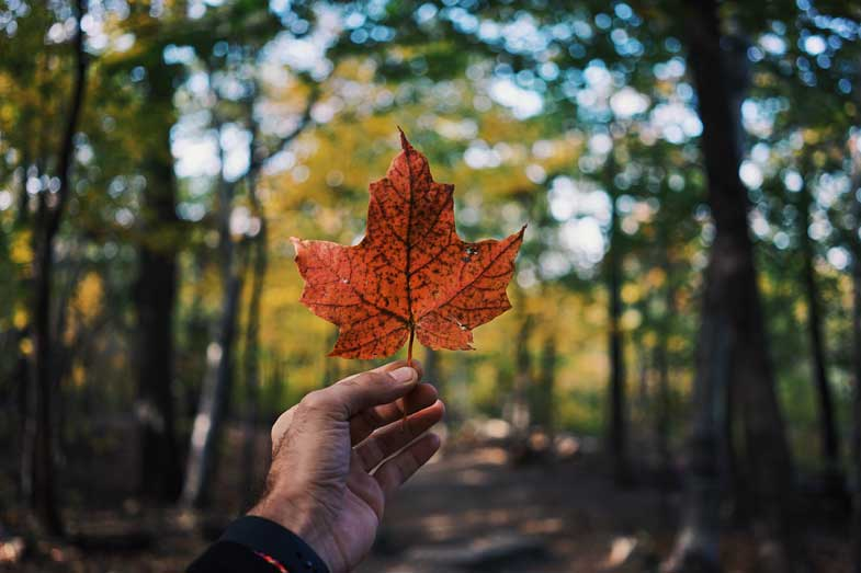 Environmental Action Shares: Hand holding leaf (Photo: Guillaume Jaillet, Unsplash)