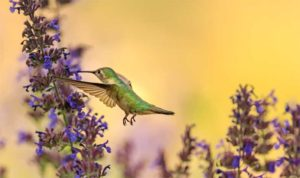 Environmental Action Shares: Hummingbird (Photo: Andrea Reiman)