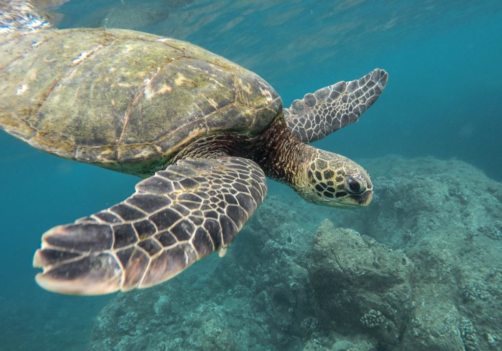 Sea turtle (Photo Jeremy ishop via Unsplash)