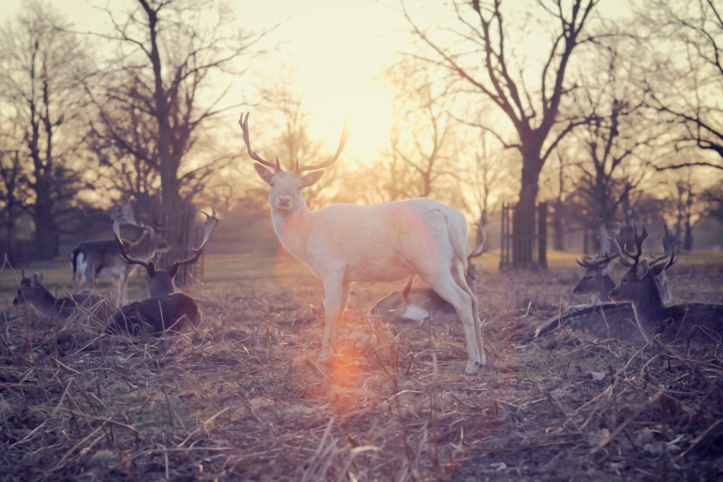 Deer (Photo: Rebecca Johnston, Unsplash)