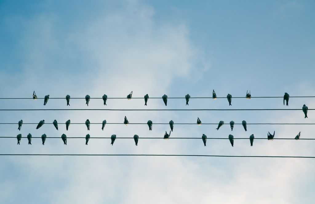 birds on lines (Photo: Pxhere)