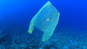 Plastic pollution in the ocean (Photo WikiMedia user MichaelisScientists CC 4.0)
