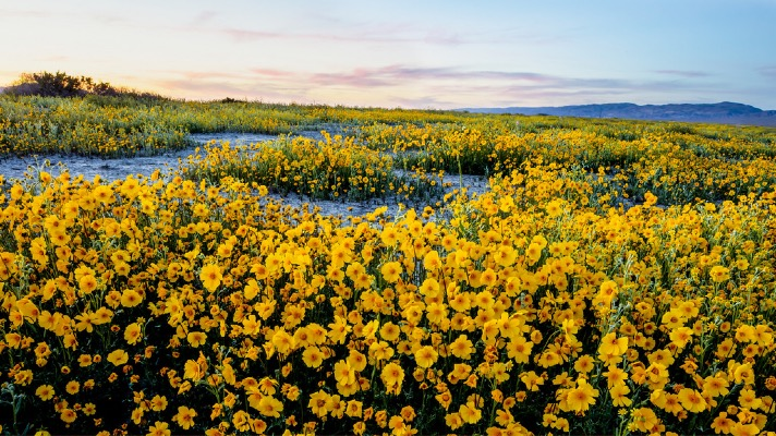 Carrizo Plain National Monument (Photo: BLM)