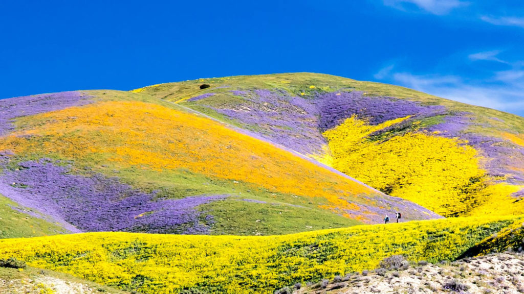 Carrizo Plain National Monument (Photo: Bob Wick, BLM)
