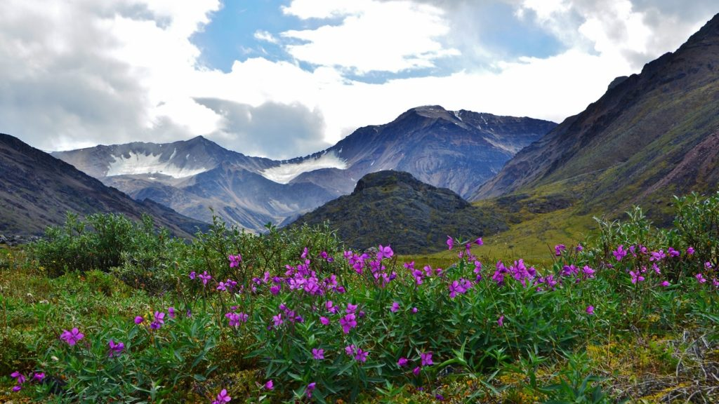 Arctic National Wildlife Refuge (Photo: Shutterstock)