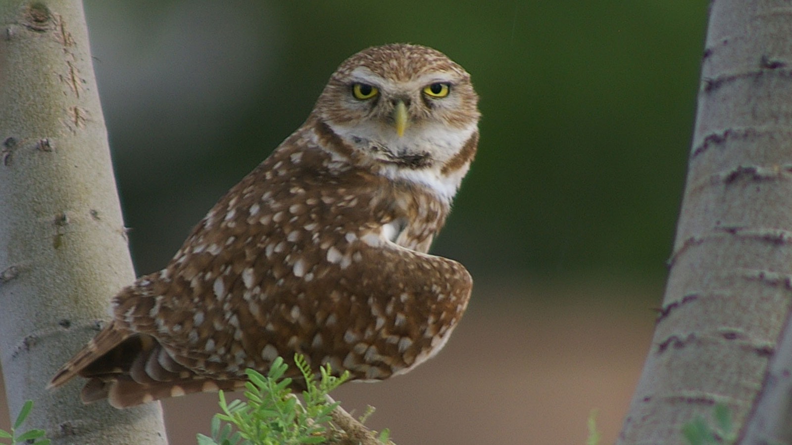 Owl (Photo: Unsplash)
