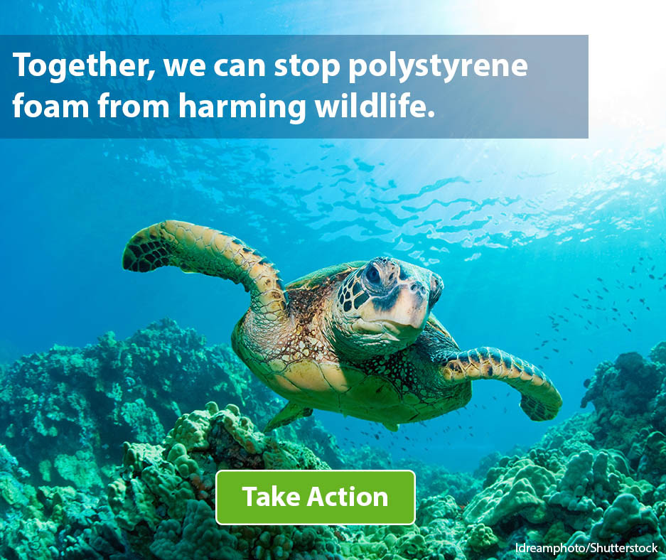 Take action to save marine wildlife like sea turtles