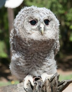 Help save owls and protect nature.