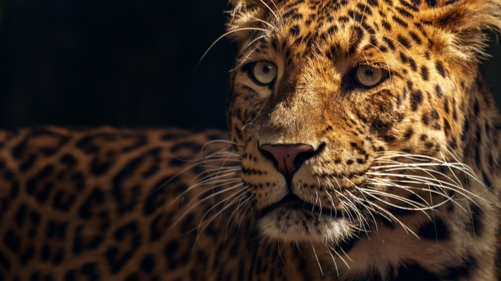Jaguar (Photo: edmondlafoto)