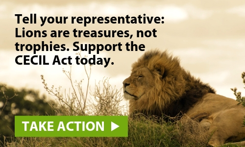 Take action to protect the environment
