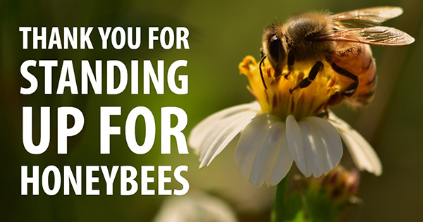 A Victory for Bees